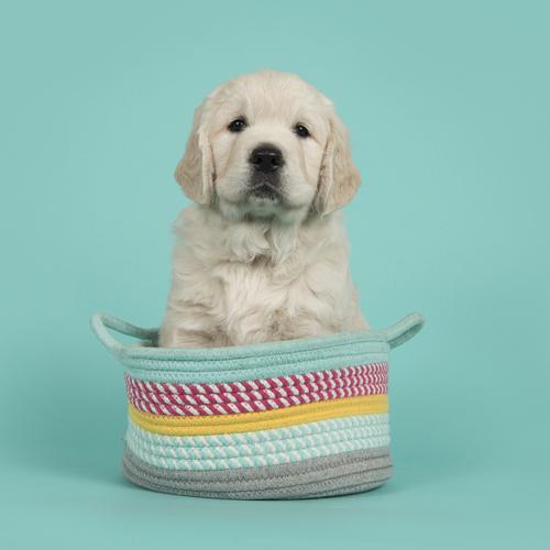 dog photo alpine seamless paper backdrop
